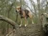 dogwhispererworlddog1