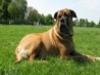dogwhispererworlddog2