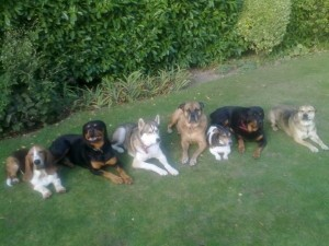 Lots of sitting dogs