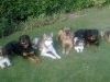 all_dogs