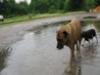 dogwhispererworlddog17