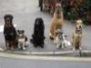 dogwhispererworlddog6